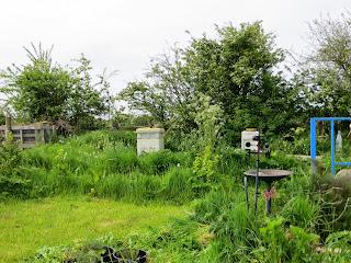 bee hives, long grass, natural habitat