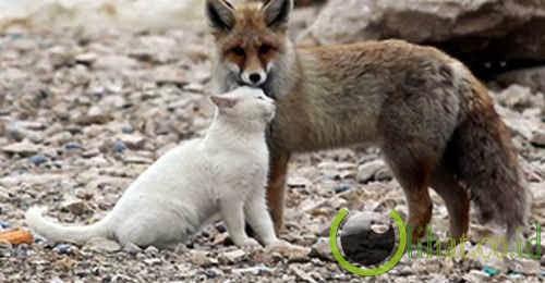 Serigala & Kucing