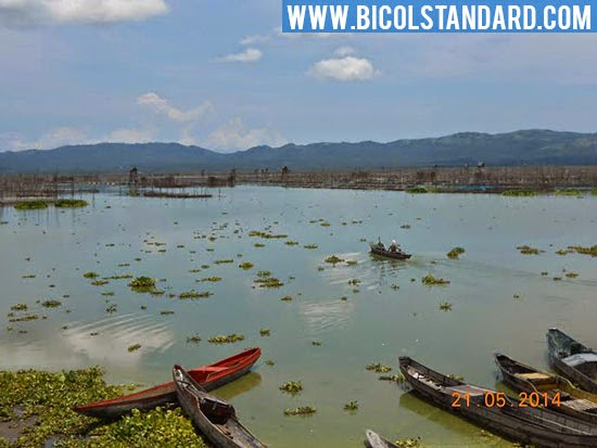 Fishkill strikes anew in Lake Bato, Camarines Sur