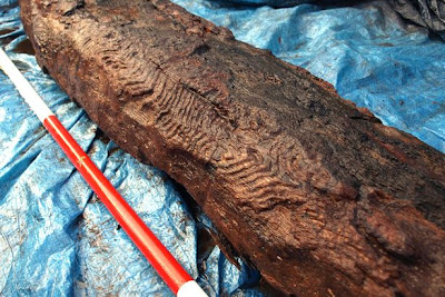 6,000-year-old wood carving unearthed in Wales
