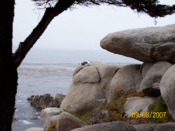Pescadero Point on Carmel Bay in California
