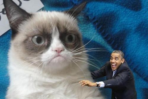Humor Obama gato