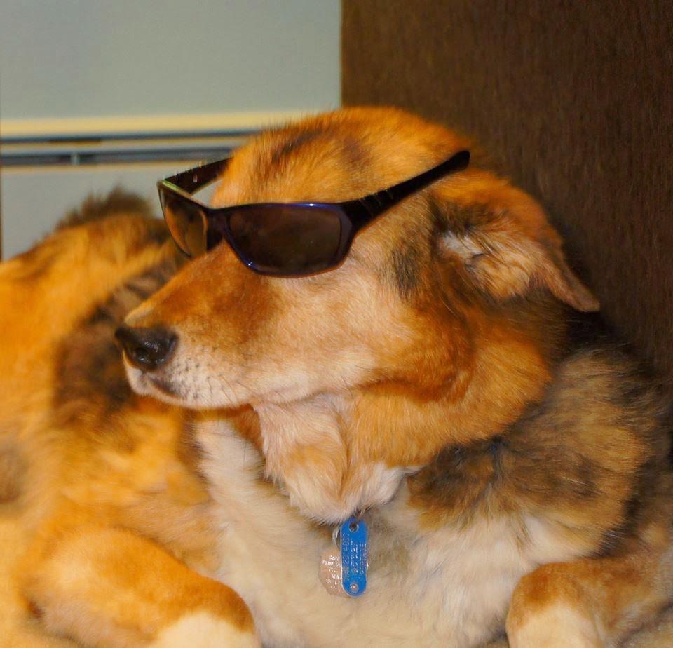 Dog wearing glasses