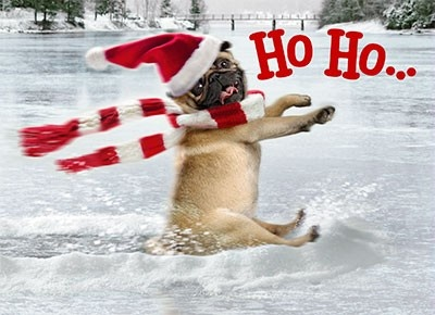 funny christmas dogs best pictures and wallpapers 2013
