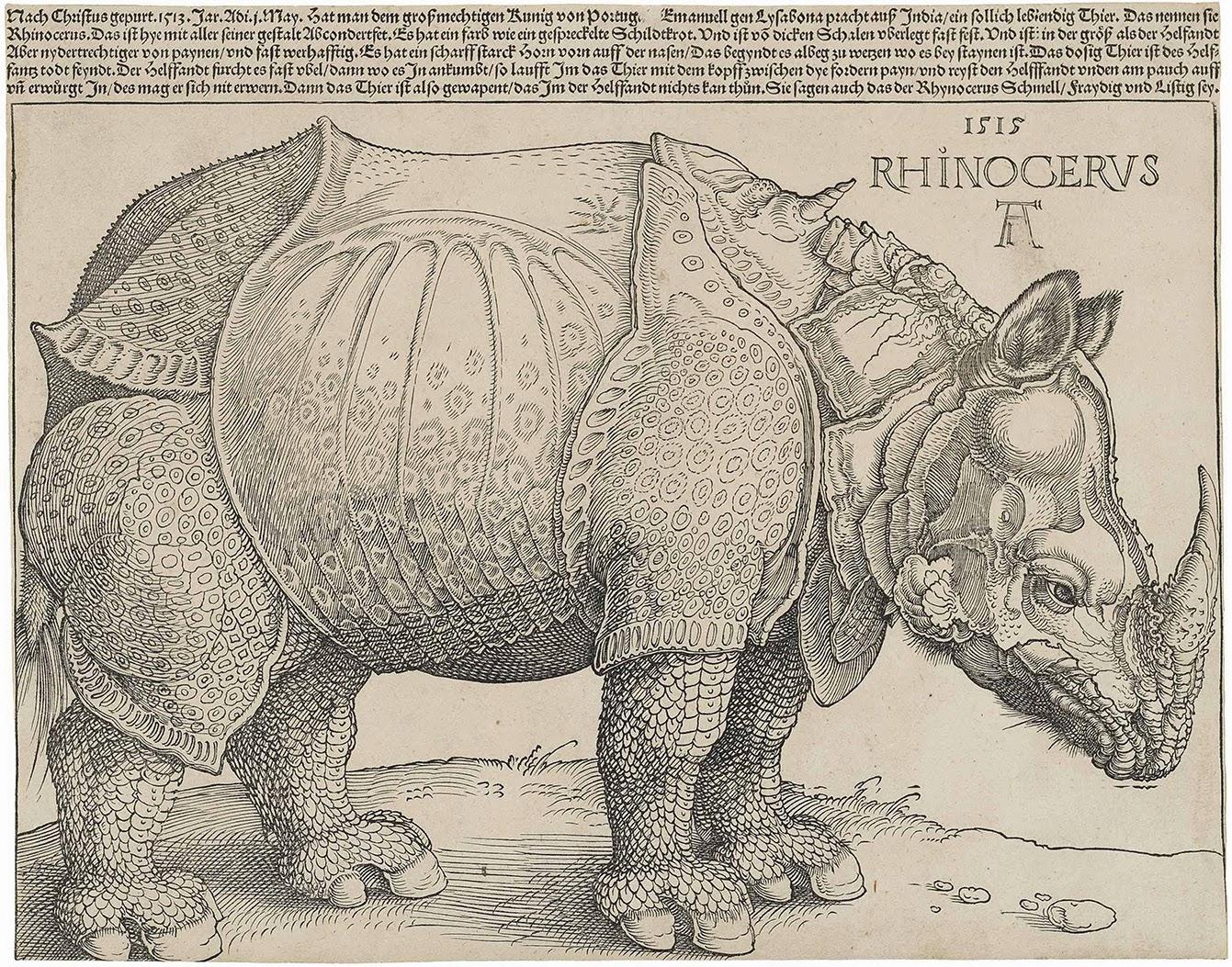 Alberto Durero, Rinoceronte - 1515 - grabado