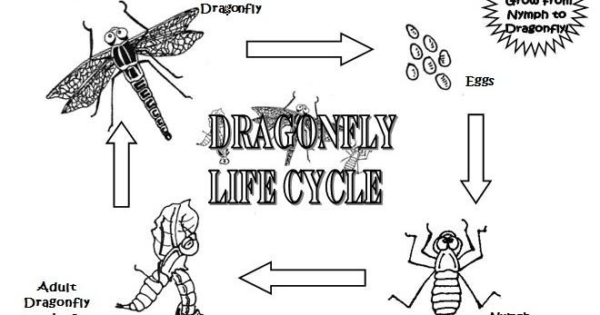 Dottie Tucker Dragonfly Larva