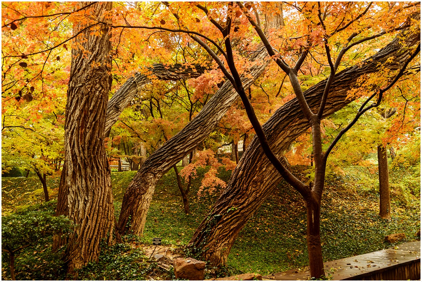 Cathy & Ron\'s Gallery: Fort Worth Japanese Garden