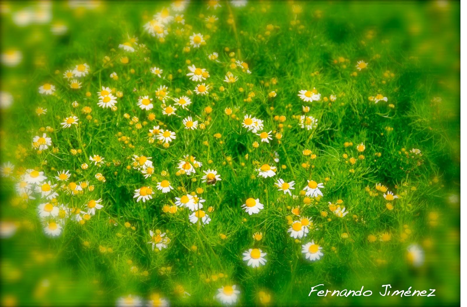 IMAGEN Y PALABRA: Unas flores amarillas