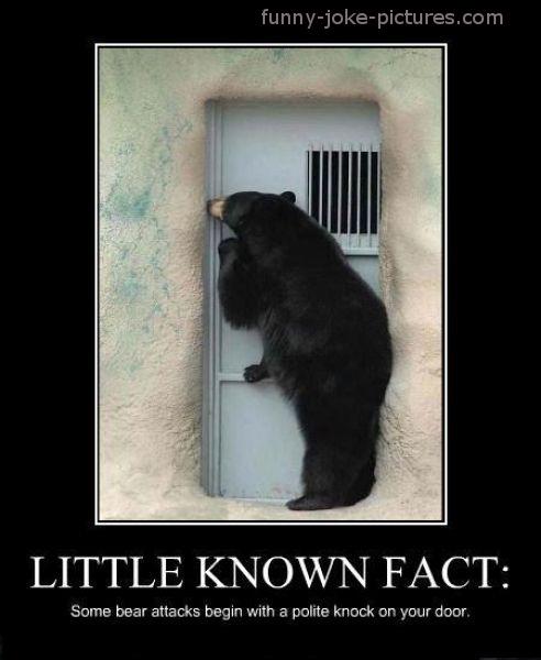 funny-bear-attack-polite-knock.jpg