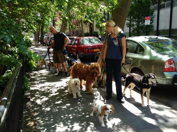 NowThisLife.com - Brooklyn Heights dog walkers