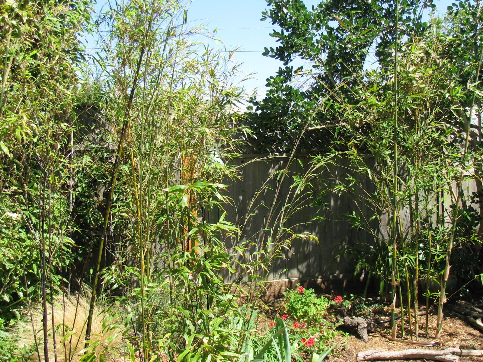 Mini Bamboo Plant : Bamboo garden in miniature june