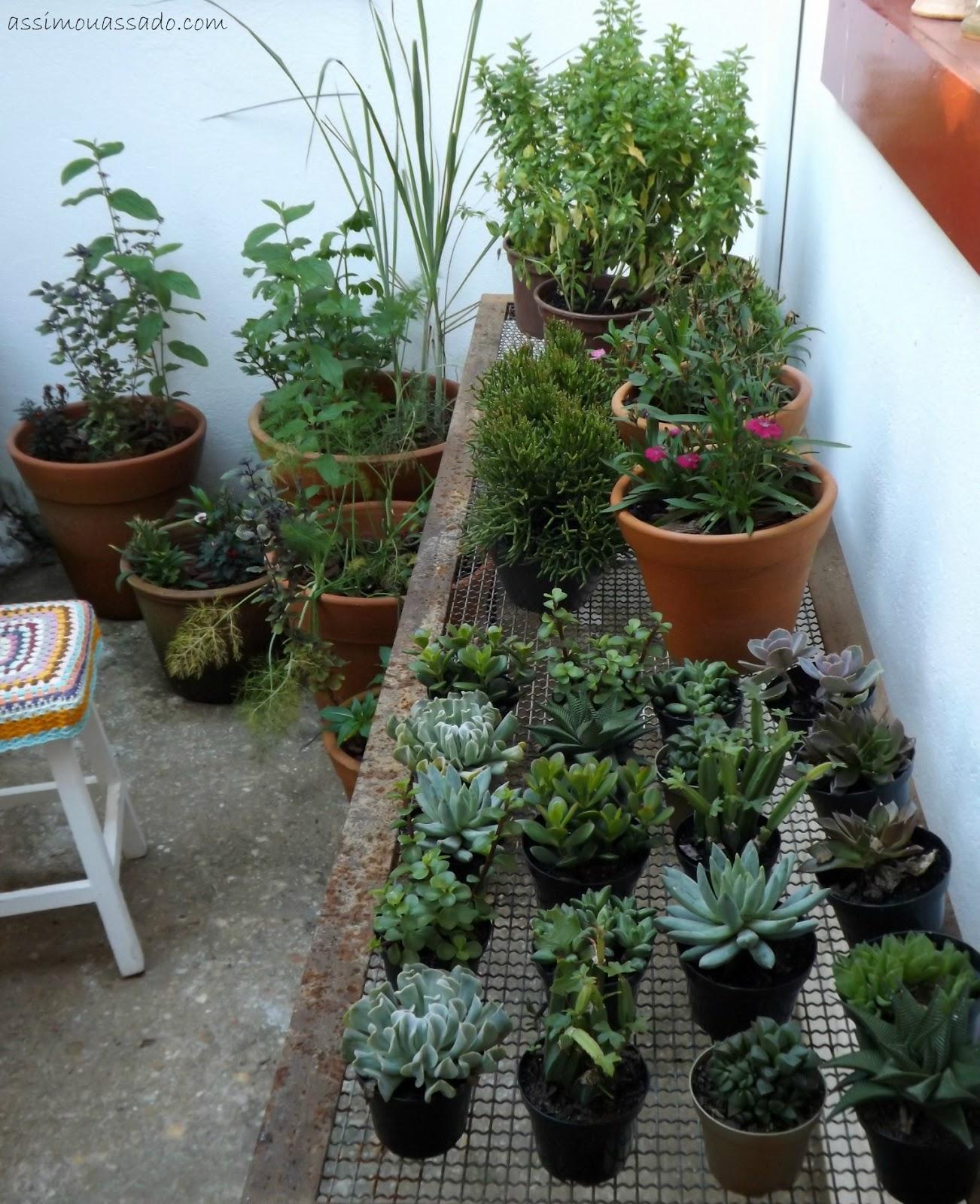 plantas para jardim faceis de cuidar suculentas Plantas bonitas e