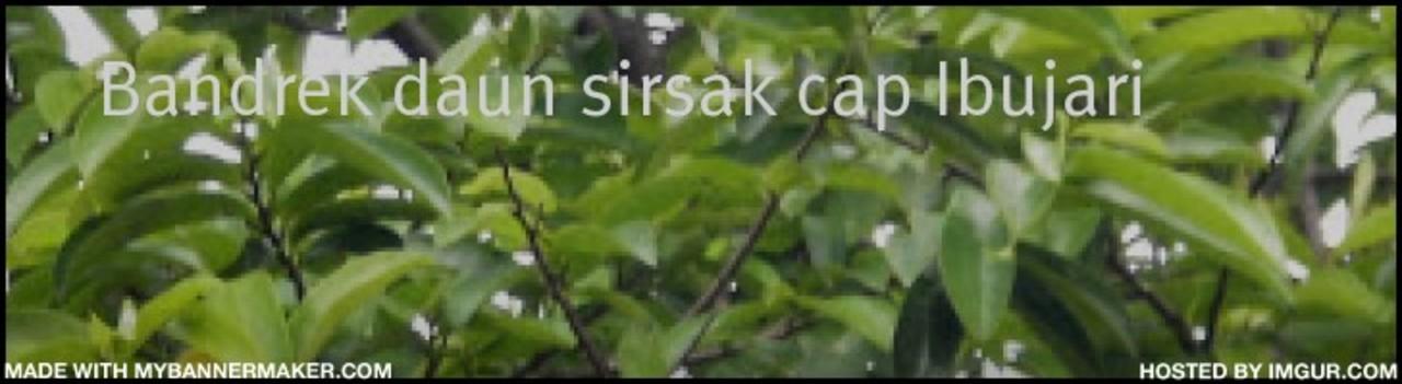 Daun Sirsak serang kanker,link,link in,link in obat, bandrek,minuman herbal.