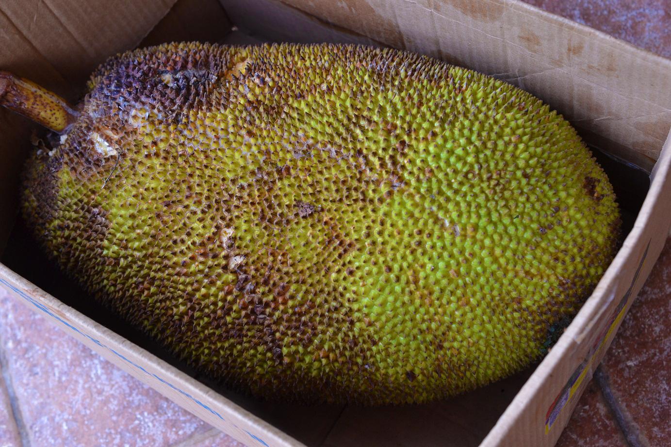 Greedy Girl : Jackfruit Grapenut Ice-cream
