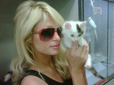 paris hilton with an adorable kitten