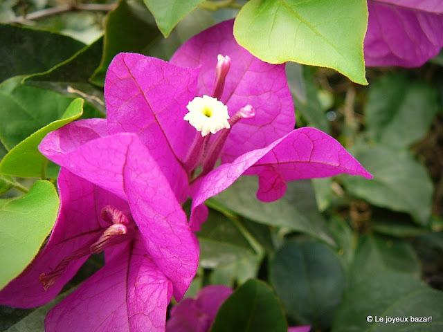 Guadeloupe  - jardin botanique des Deshaies