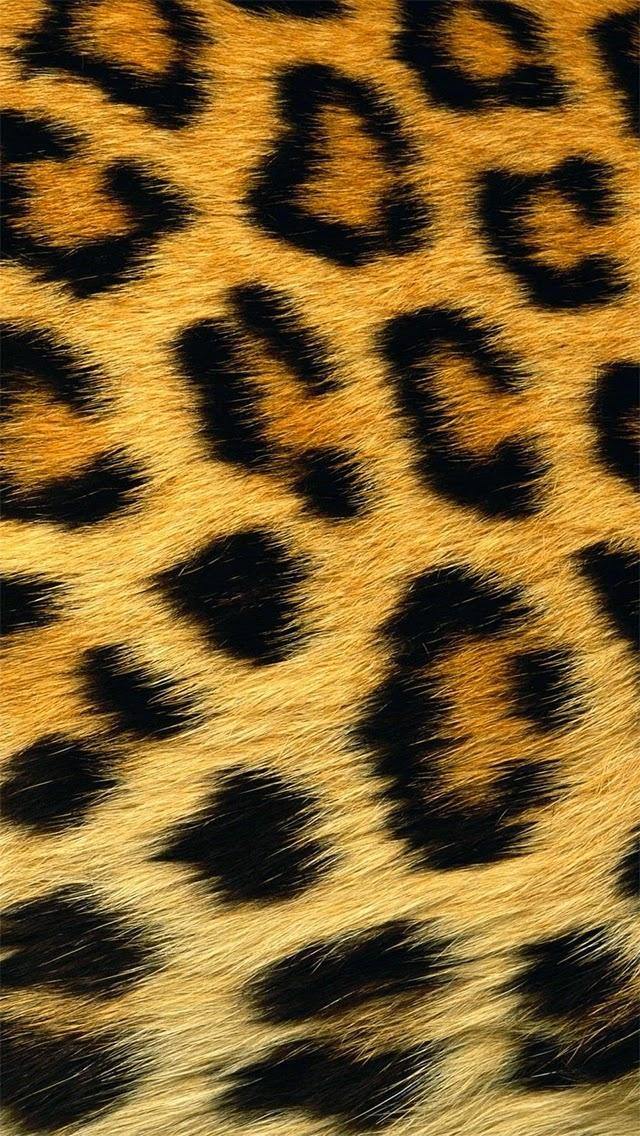 Sfondi leopardati for Sfondi cellulare full hd