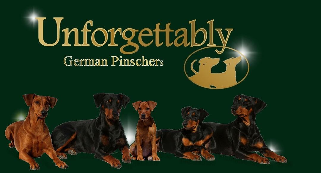Il pinscher tedesco