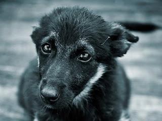 Беспризорная собака