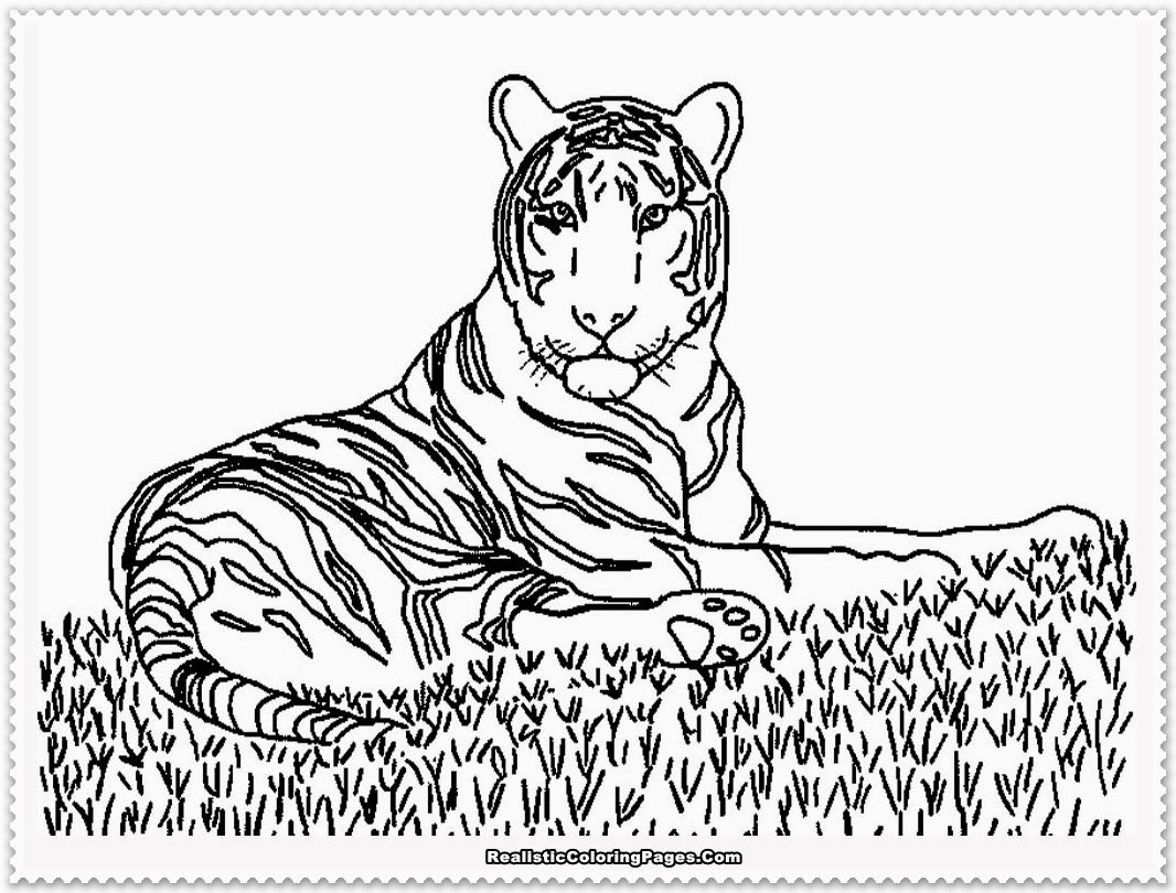 Coloring Pages Animals Realistic : Realistic tiger coloring pages