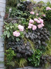 A Garden Wall at Singer Hill Cafe