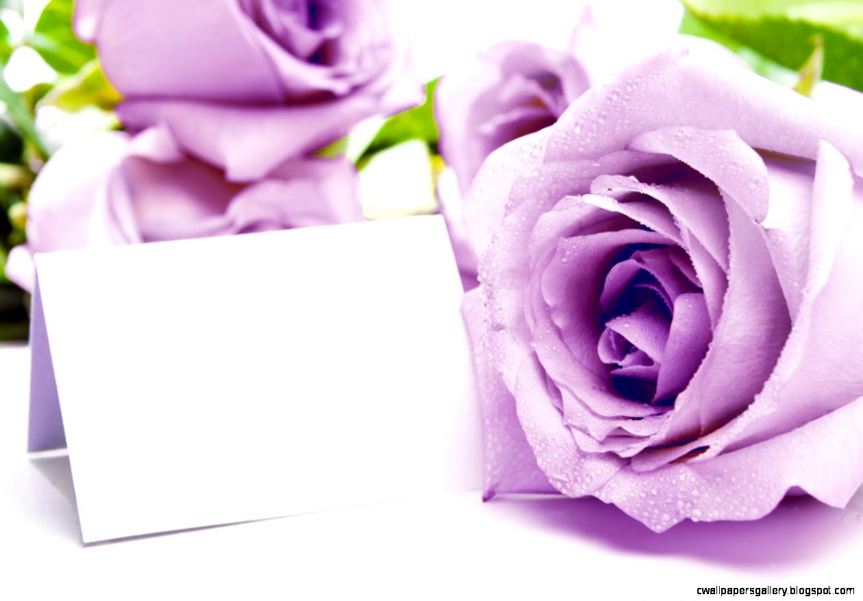 Purple flowers 31132   Flower Wallpapers   Flowers