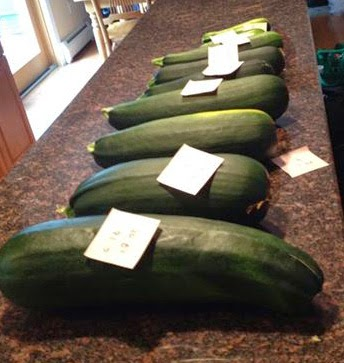 really huge zucchini