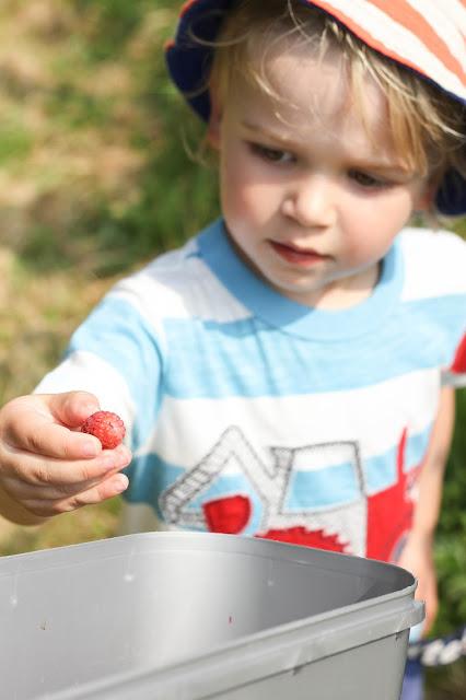 toddler on farm