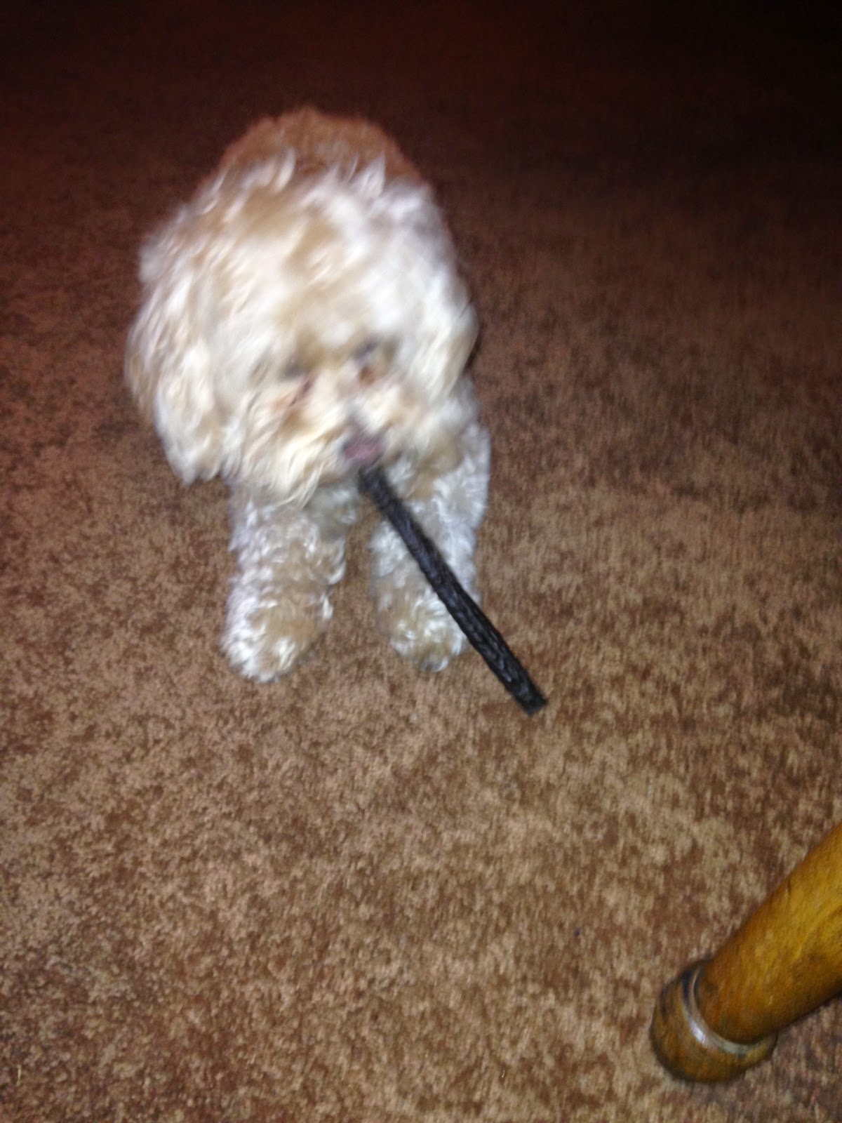 Etta says bison chew