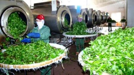 Tăng cường cung cấp các sản phẩm chè Thái Nguyên dịp Tết
