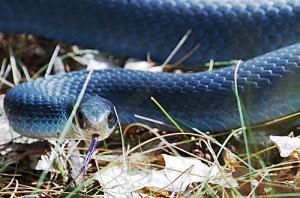 Most Popular Best Pets In The World - Snakes