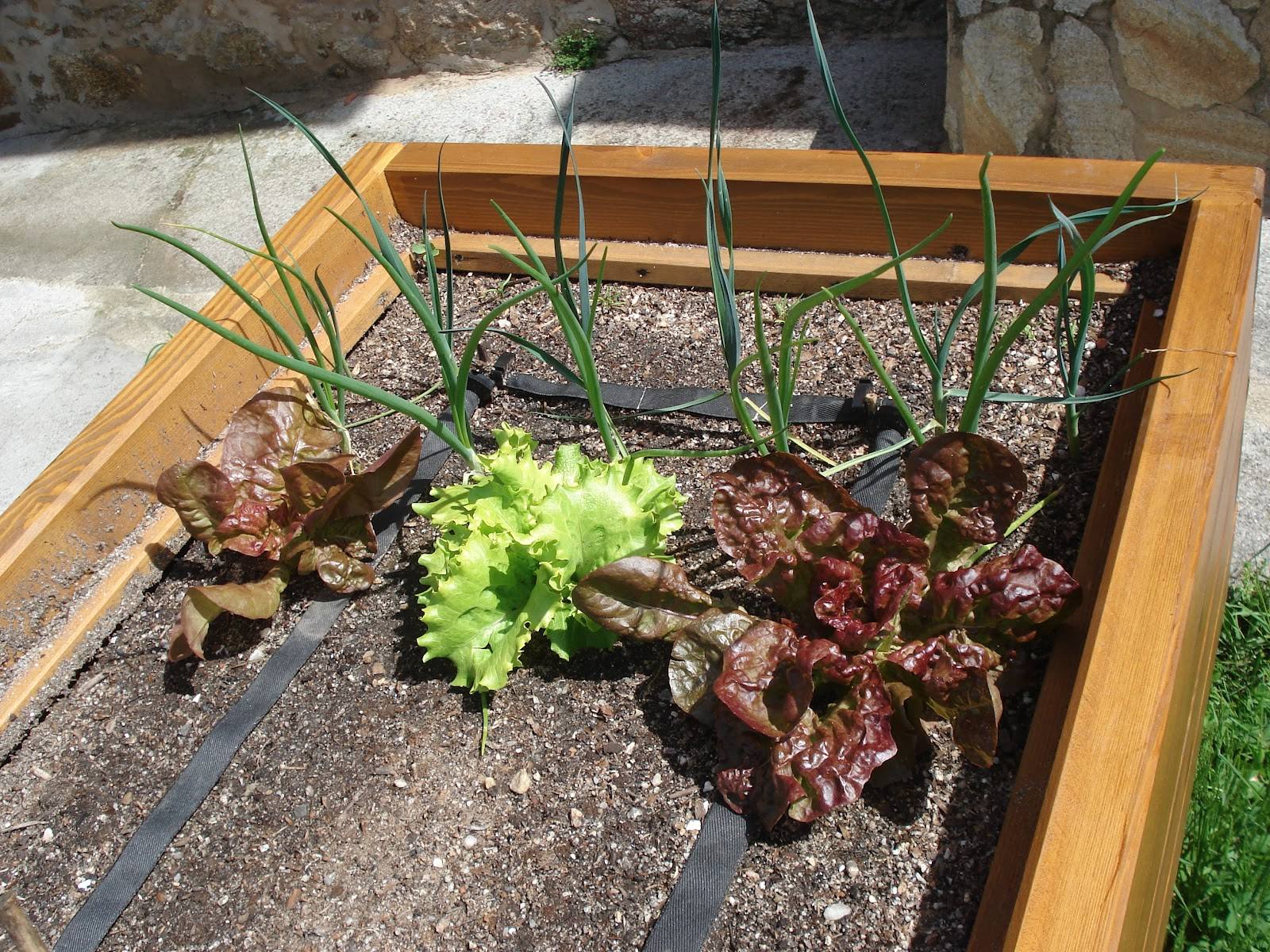 Madreselva jardiner a ecol gica madreselva xardiner a for Jardineria ecologica