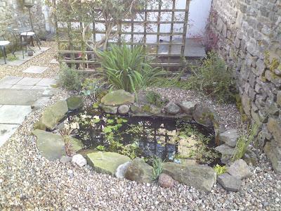 The poorest company building a wildlife pond part 4 - Build pond wildlife haven ...