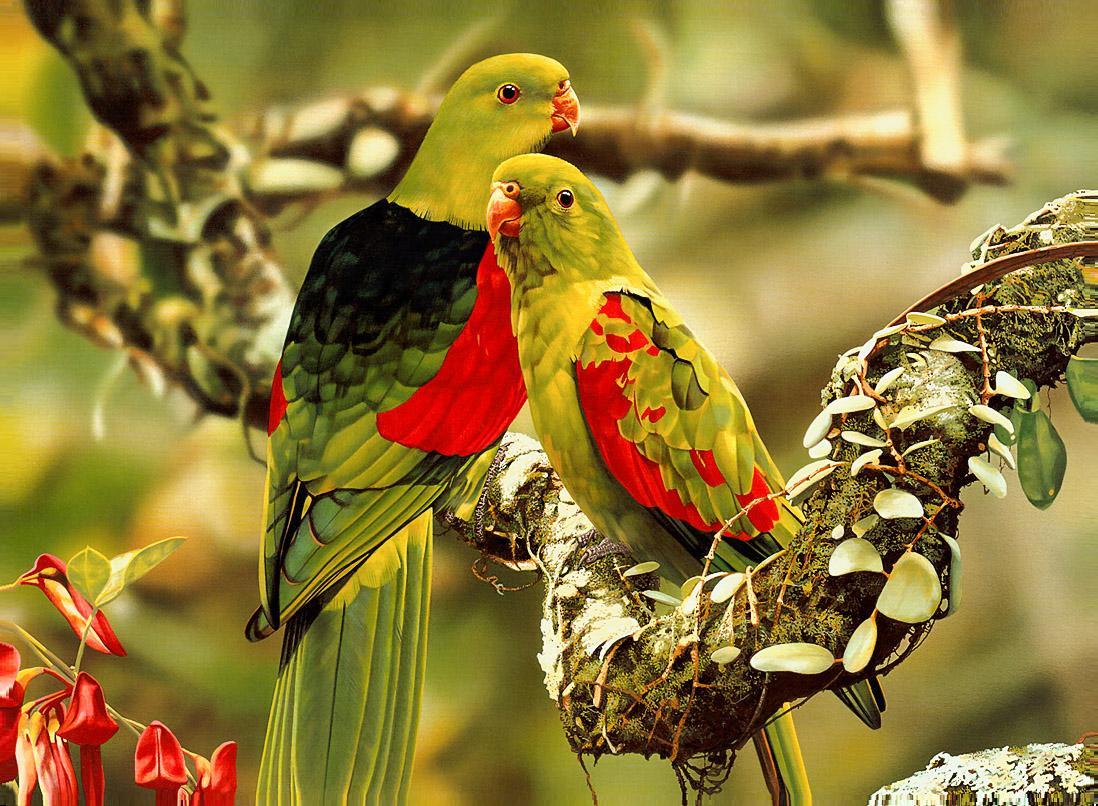 Cute Tropical Colors Parrot HD Wallpaper - tropical colors parrot wallpapers