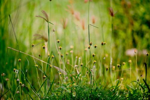 Maibelopah Bunga Di Tepi Jalan