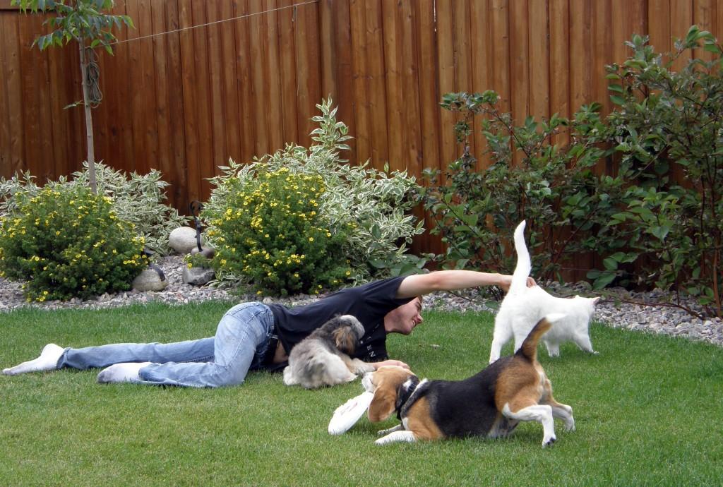 Comportamiento animal c mo hacer que mi perro acepte a for Ahuyentar gatos de mi jardin