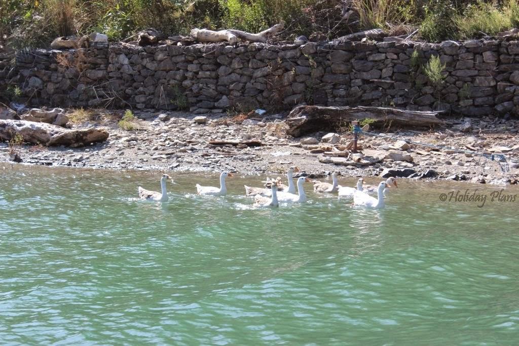 Water birds!