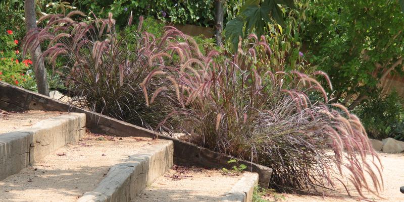 Botanisk Have, Marimurtra