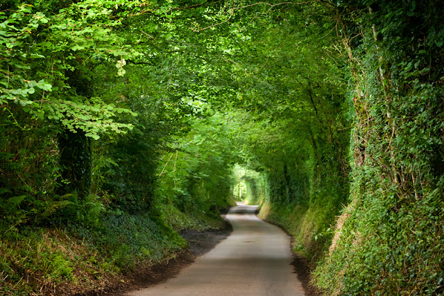 Exmoor country lane winds through a lush green tunnel of vegetation by Martyn Ferry Photography
