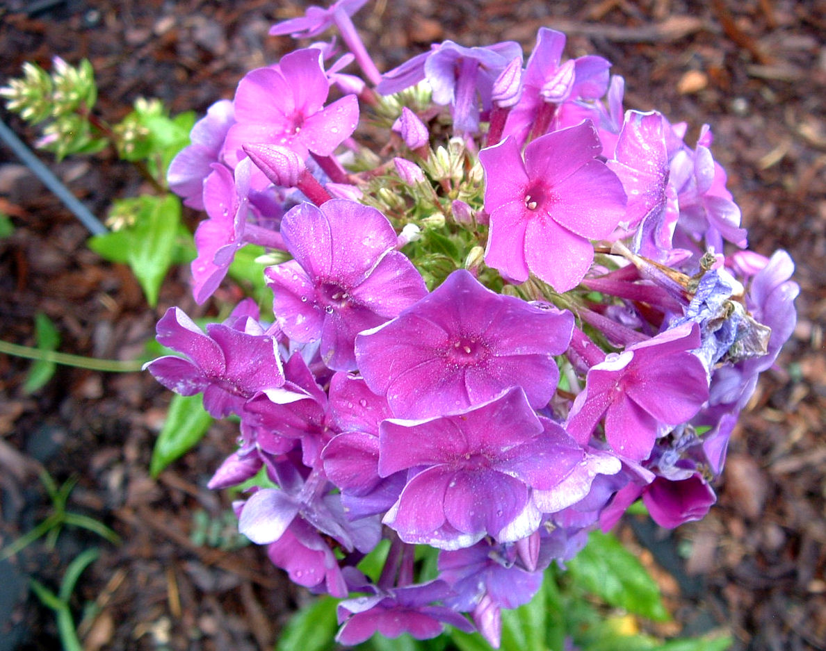 phlox divorced singles Divorced singles dating it is best to do the creative profile for the reason that it makes your profile attractive and also for the reason that it shows your creativity and your tastes on the other hand, it is important to be respectful and kind to people who contact you.
