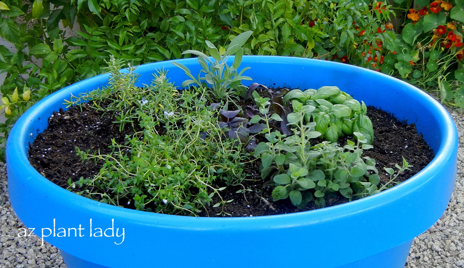 Create a herb container ramblings from a desert garden for Container herb garden