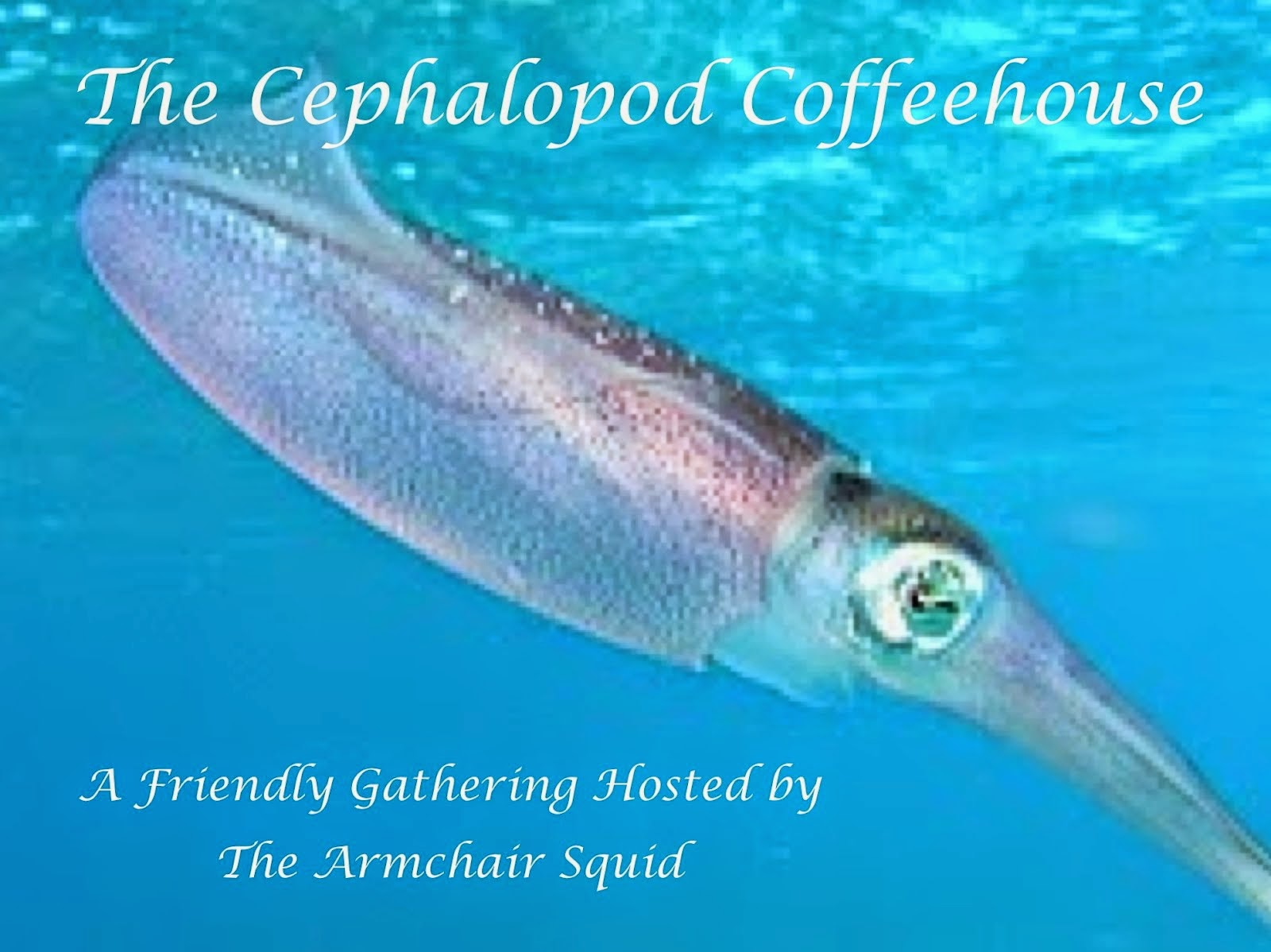 The Cephalopod Coffeehouse - November 28th