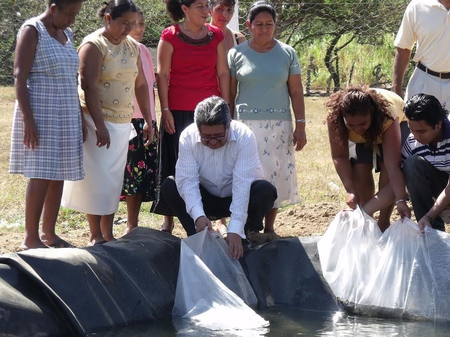 Imagen de tonal chiapas acuicultoras de la costa for Criar mojarras en casa