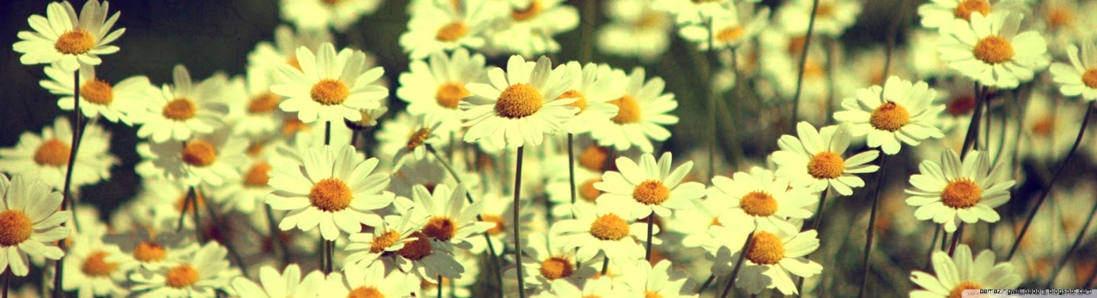 Vintage Daisies Tumblr Amazing Wallpapers