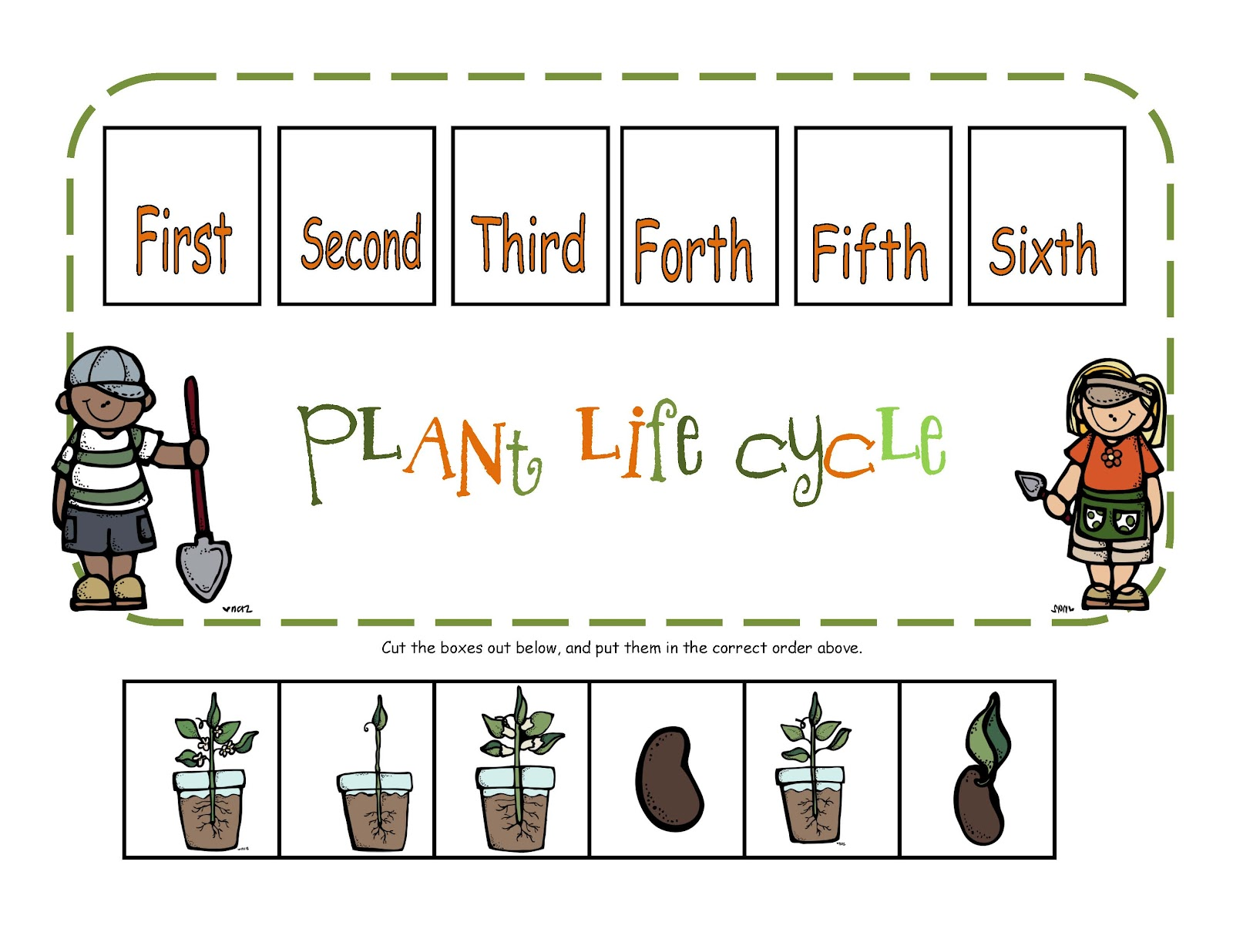 Free Worksheet Life Cycle Of A Plant Worksheet plant life cycle in order by caroline soesbee teachers pay teachers
