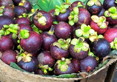 manfaat buah manggis bagi kesehatan