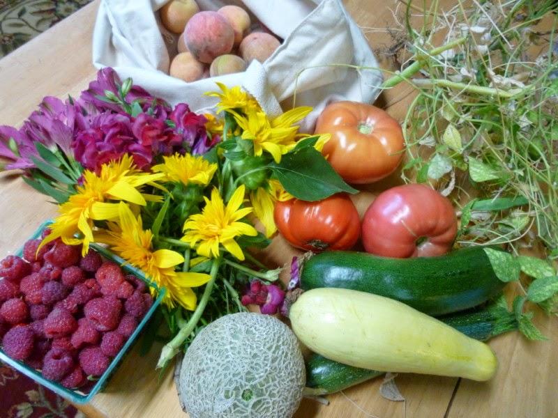 an evening harvest