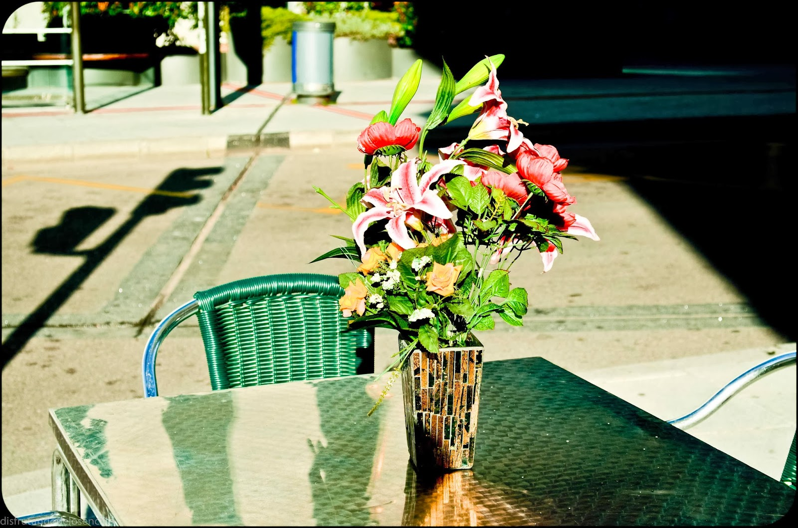 flores en burgos, c.araus