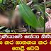 5 year old Girl found murdered In Kotadeniyawa - Updates
