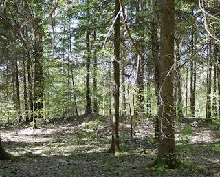 Bild 4: Hügel entsprechend dem nordwestlichen Grabhügelsymbol in der Markierungsfläche
